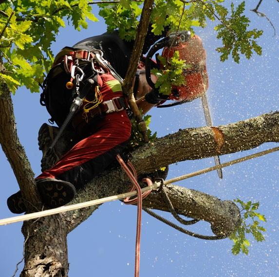 Taillez vos arbres et arbustes à Montpellier