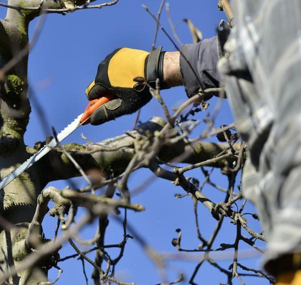 comment tailler un arbre avec efficacité