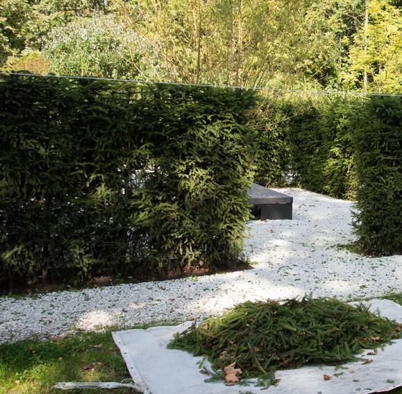 taille d'arbres résineux à Montpellier