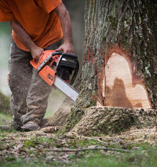 couper un arbre à Montpellier