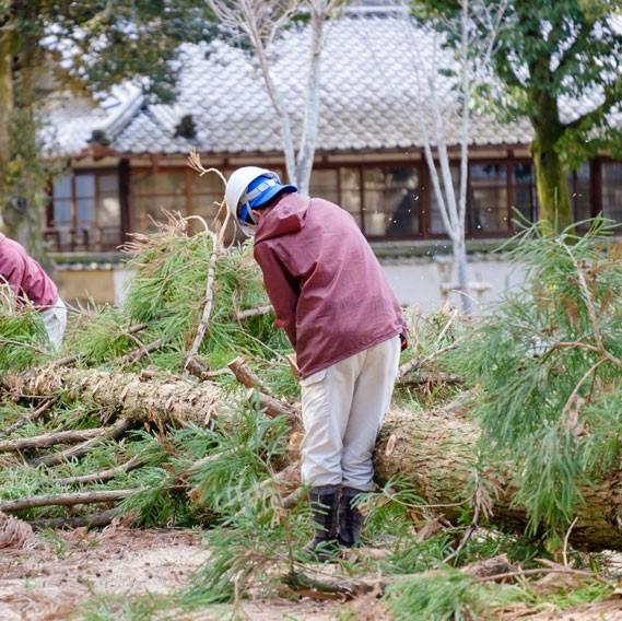 Abattre un arbre en copropriété à Montpellier